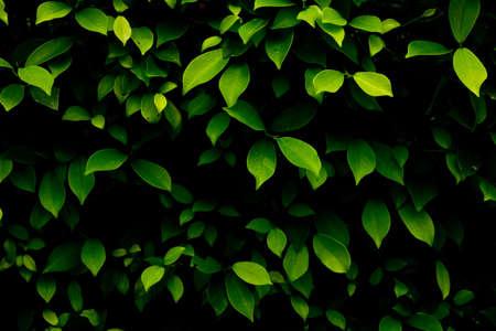 Green leaves in gardn background