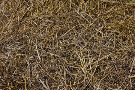 straw texture  photo