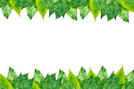 Tropical leaf frame on white  Stock Photo