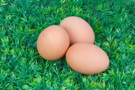 three eggs on grass Stock Photo