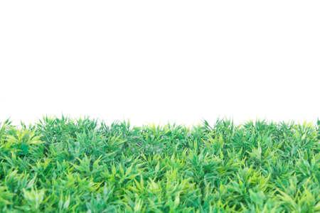 grass on background