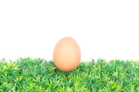 egg on grass
