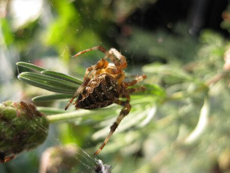 aracnidos: Spider en una rama  Foto de archivo