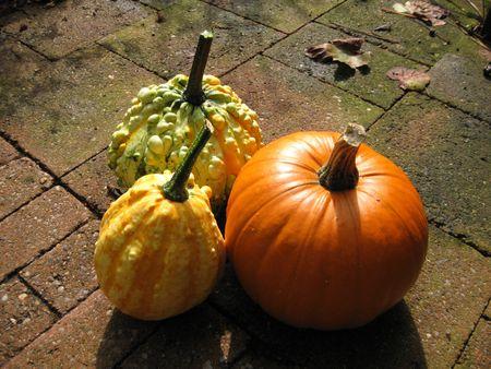Halloween essentials photo