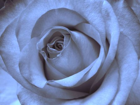 captivating: abstract blue rose