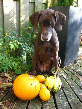rifrug: Watch my pumpkins! Stock Photo