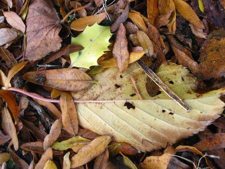 autmn: autmn leaves