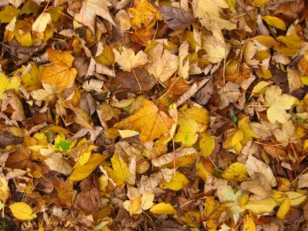 a background of autumn leaves photo