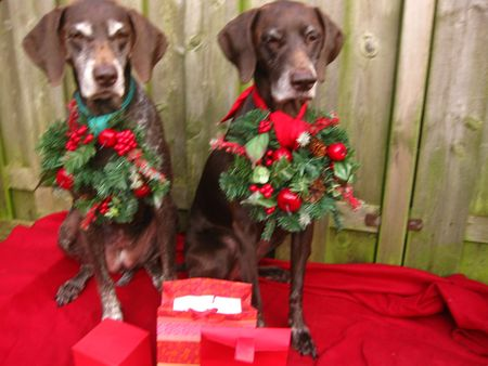 Christmas with the pointer sisters photo
