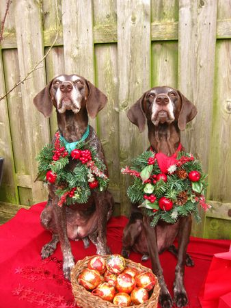 Christmas with the pointer sisters Stock Photo - 3874299
