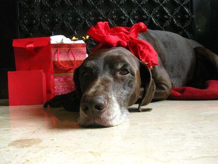 I wait for Santa... photo