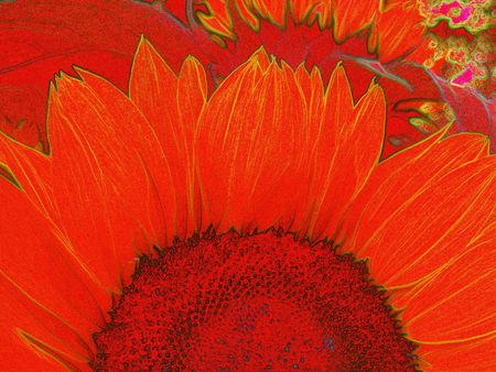 digital drawing of a sun flower photo