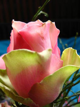 captivating: pink green rose