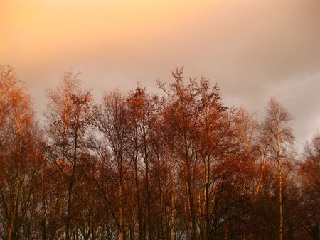 icey: thunder in the air over autumn
