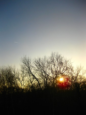 cloud drift: sunset and winter trees