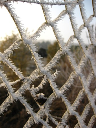 icey: Winter in Holland frosted fence