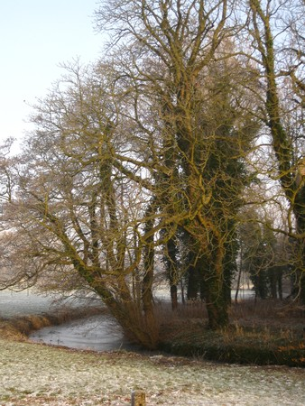 icey: Winter in Holland