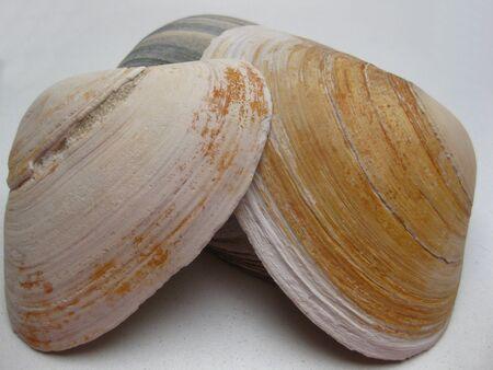 seashells Stock Photo - 4084122