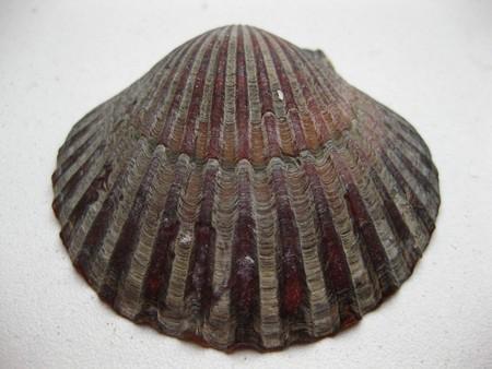 seashell Stock Photo - 4084127