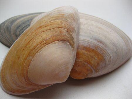 Seashells Stock Photo - 4084121