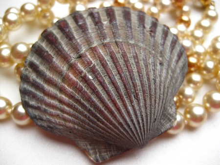 seashell and pearl necklace Stock Photo - 4084126
