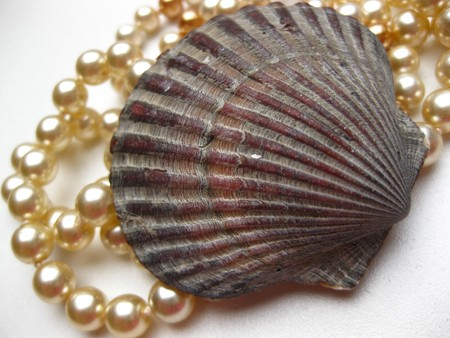 seashell and pearl necklace photo