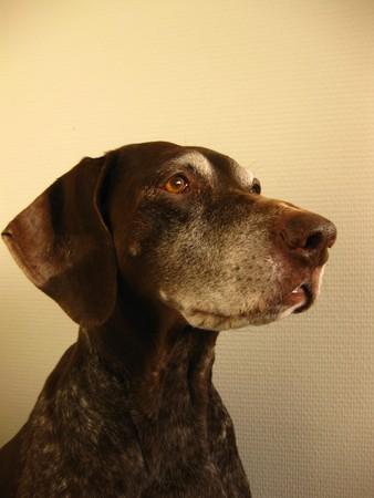 rifrug: Portrait of a pointer
