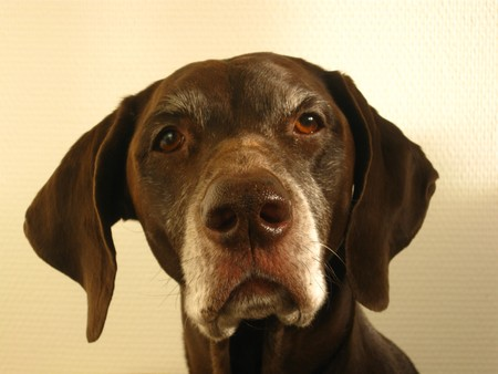 rifrug: Portrait of a pointer