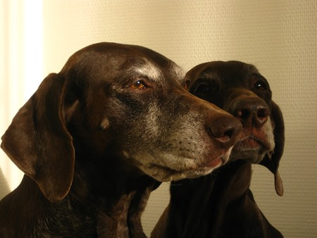 rifrug: Portrait of the pointer sisters