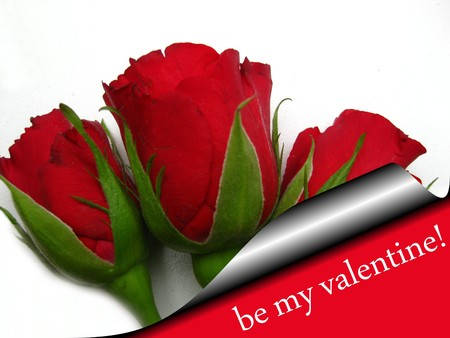 Valentine card roses Stock Photo - 4217258
