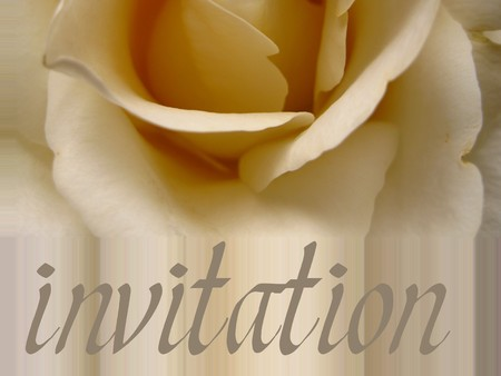 ecard: Invitation card with white rose
