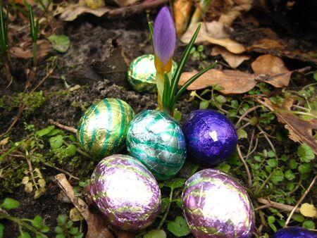 early crocus egg hunt Stock Photo - 4357867