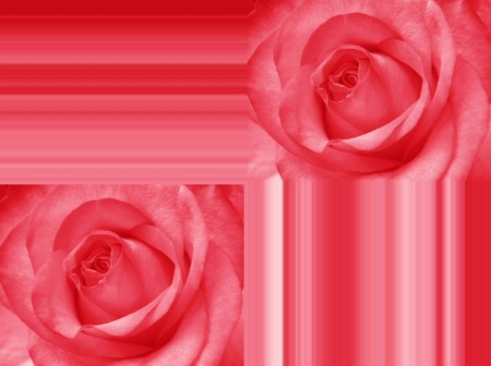 roses greeting card photo