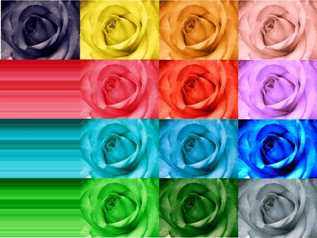 rainbow rose greeting card photo