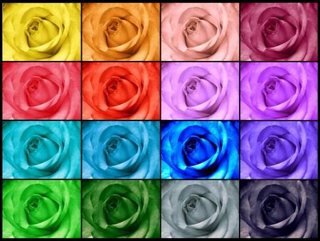 ecard: Rainbow rose biglietto di auguri
