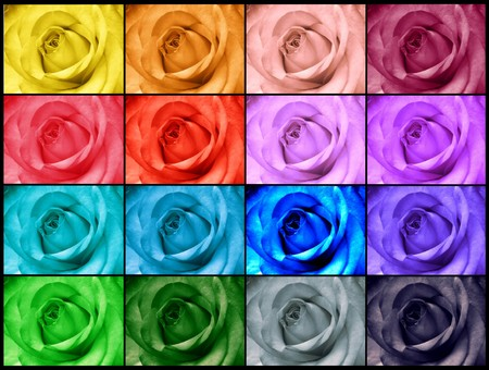 Rainbow roses greeting card photo