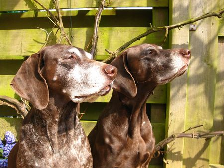 rifrug: pointer sisters in the sun