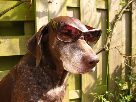 rifrug: Spring pointer in the sun