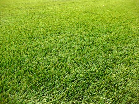 artifical grass background Stock Photo - 4664918