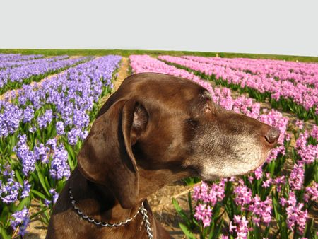 rifrug: pointer in the field