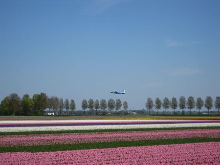 hyacints narcissus: Flower fields with plane taking off