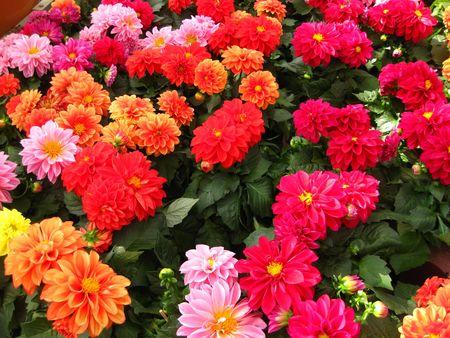summer daisy collection photo