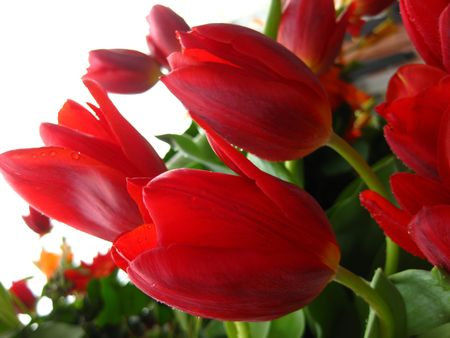 red tulip flower arrangement photo