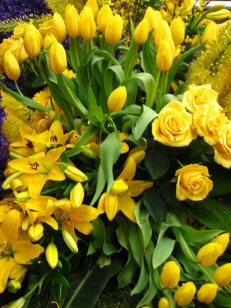 hyacints narcissus: yellow flower arrangement on floral parade