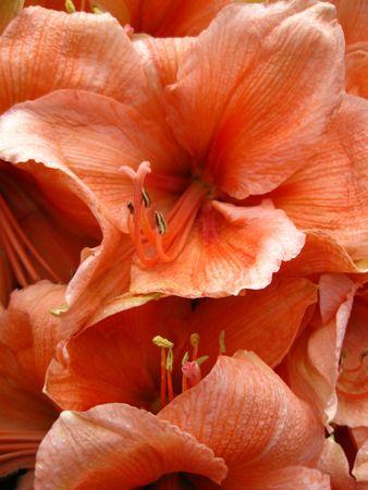 hyacints narcissus: orange amaryllis arrangement