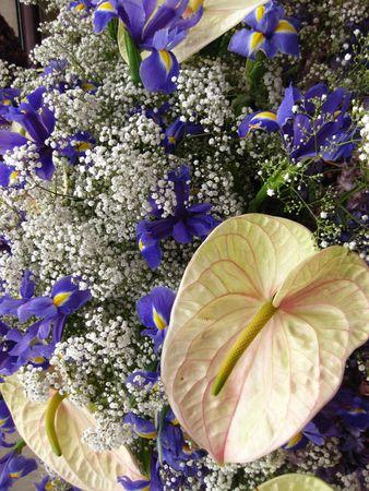 hyacints narcissus: Flower arrangement on flower parade: anthurium and hyacint Stock Photo