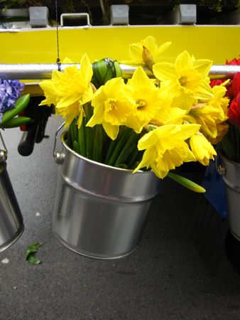 hyacints narcissus: narcissus in bucket