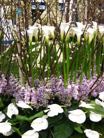 hyacints narcissus: Flower arrangement Stock Photo
