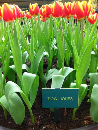 Stock index named tulips photo