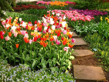 tulips in a park Stock Photo - 4772728